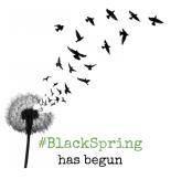 BlackSpring-HiRes-476x500
