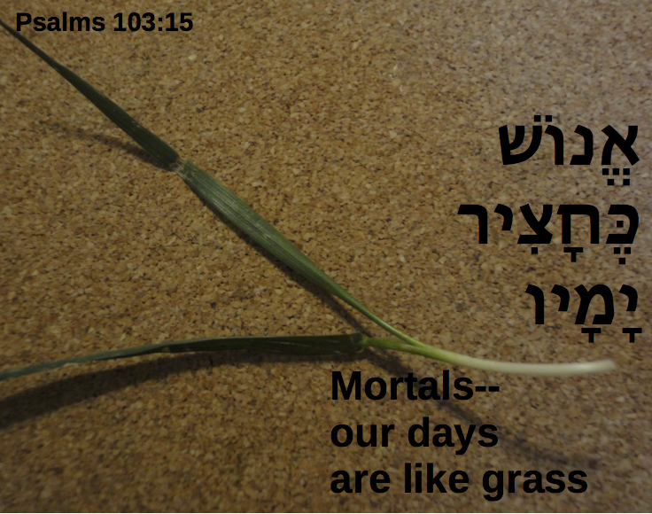 grass2