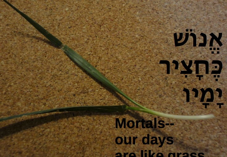 Grass Roots: a holiday question and memorialreflection