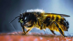 yellow and black bee in macro photography
