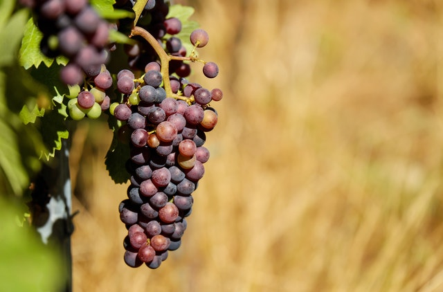 shallow-focus-photography-of-purple-grapes-162672